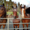 Gut Altenhain / Sportpferde Carina Baudach - Écurie de chevaux - Witten