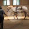 Reitanlage Moarhof Eitzing - Horse stable - Rattenkirchen