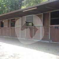 Pferdevermittlung May NRW - Venda de cavalos - Wachtendonk