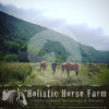 Holistic Horse Farm - Natural equine Boarding facility - Mossel Bay NU