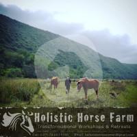 Holistic Horse Farm - Natural equine Boarding facility - Mossel Bay NU