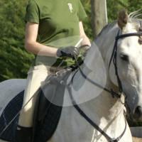 Corban Iberians Spanish Horse Stud