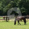 Reitschule und Zuchtbetrieb Berger - Scuola di equitazione - Viersen