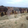 "Nikolaev branch of a shelter for horses ""Ugolyok"""