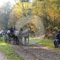 Reit- und Fahrstall Corsten - Carriage rides - Alst