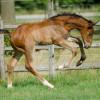 Pensionstal Harbers - Equestrian facility - Hilvarenbeek