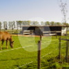 Offenställe Hoffsümmer - Open stable - Erftstadt