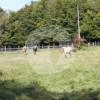 Glockenhof Saarbrücken - Horse stable - Saarbrücken