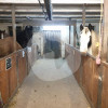 Reitstall Rahmenhof - Horse stable - Weeze