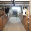 Reitstall Rahmenhof - Cavalo estável - Weeze
