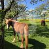 Hubelhof - Cavalo estável - Heimberg