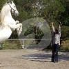 Miryam Husain - Zentrum für pferdegerechtes Reiten - Horse ranch - Ankum