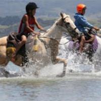 Kawhia Ocean Beach Horse Riding Treks