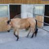 Etterhof - Horse ranch - Oberrüti