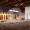 Berberzucht/Pensionsstall Arîj El Fouad - Horse Breeding - Bern