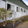 Ernst Performance Horses UG (haftungsbeschränkt) - Pferdeausbildung - Windeck