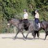 Reitstall Blechhof - Horse ranch - Dormagen