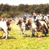 Reitschule Monika Prediger - Equestrian facility - Bergisch Gladbach
