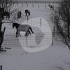 Reiterhof Nilges- Horse riding - Krefeld
