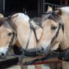 Stalhouderij de Kok - Horse ranch - Colijnsplaat