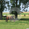 Windberger Pferdehof - Horse stable - Viersen