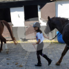 Ponycentrum Leeuwenhoek - 骑术学校 - 乌赫斯特海斯特
