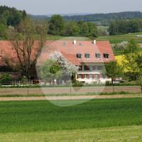 Hulmenhof Islandpferdehof - Horse rides - Gotzenwil