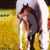 Reitschule Gut Waldsee - Equestrian facility - Erftstadt