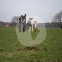 Degis Farm - Horse ranch - Schermbeck
