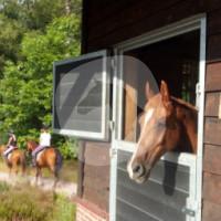 Camping De Reeeënwissel - Equestrian Center - Hoogersmilde