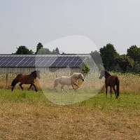 Hof am Froschenteich - Horse stable - Düsseldorf