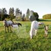 Little Rock Ranch - Horse breeding - Oberhosenbach