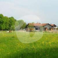 Reiterhof Speckmaier - Caballo estable - Gars a. Inn