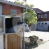 Reitstall Krämer - Horse stable - Schwieberdingen