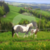 Ranch Fultigenegg - Caballo estable - Rüeggisberg