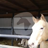 Felder Hof - Horse stable - Wachtendonk