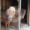 Pferdepark Faistenberg - Horse ranch - Nandlstadt