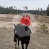 Gunas zirgi - Cavalo estável - Pope