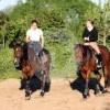 Hof Pariner Berg - Horse ranch - Bad Schwartau